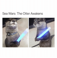 Funny, Memes, and Ted: Sea Wars: The Otter Awakens Follow me @hilarious.ted for more animal memes