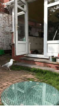 Cats, Dank, and 🤖: Seagull 1 - Cats 0  Pathetic.