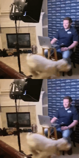 Seahawks GM John Schneider's dog kept running around the house during his video conference 😂 https://t.co/WDcgJ36LPa: Seahawks GM John Schneider's dog kept running around the house during his video conference 😂 https://t.co/WDcgJ36LPa