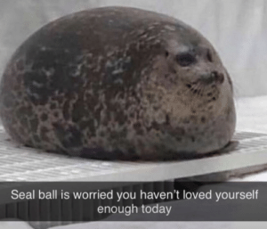 He is worried about you: Seal ball is worried you haven't loved yourself  enough today He is worried about you