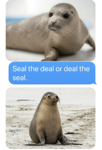 Seal: Seal the deal or deal the  seal
