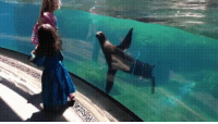 Girl, Trips, and Concern: Sealions concern as girl trips and falls
