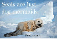 Seal: Seals are just  dog mermaids  Think about it.