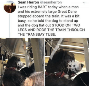 Bart, Today, and Train: Sean Herron @seanherron  I was riding BART today when a man  and his extremely large Great Dane  stepped aboard the train. It was a bit  busy, so he told the dog to stand up  and the dog flat out STOOD ON TWO  LEGS AND RODE THE TRAIN THROUGH  THE TRANSBAY TUBE. Making sure theres room for everyone