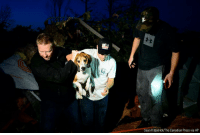 Charlie, Friday, and Memes: Sean Kilpatrick/The Canadian Press via AP A dog named Charlie is rescued after being found under a pile of debris after a tornado touched down in Dunrobin, Ontario on Friday.