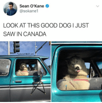 😂😂lol: Sean O'Kane  @sokane1  LOOK AT THIS GOOD DOG I JUST  SAN CANADA  Featured @will ent 😂😂lol