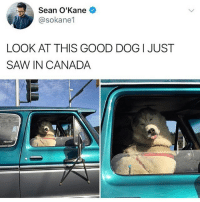Follow my other accounts @antisocialtv @lola_the_ladypug @x__antisocial_butterfly__x ❤️: Sean O'Kane  @sokane1  LOOK AT THIS GOOD DOG I JUST  SAW IN CANADA Follow my other accounts @antisocialtv @lola_the_ladypug @x__antisocial_butterfly__x ❤️