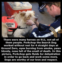 bloody nose: SEARCH  Book  There were many heroes on 911, not all of  them people. Porkchop the Search Dog  worked without rest for 4 straight days at  Ground Zero, eyes burning from smoke, paws  bloody, nose full of the smell of death. In this  picture, Porkchop gets fluids for dehydration  in order to go back and work some more.  Dogs are worthy of our love and respect.
