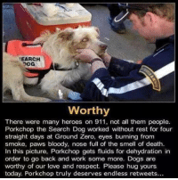 Porkchop.: SEARCH  Worthy  There were many heroes on 911, not all them people.  Porkchop the Search Dog worked without rest for four  straight days at Ground Zero, eyes burning from  smoke, paws bloody, nose full of the smell of death.  In this picture, Porkchop gets fluids for dehydration in  order to go back and work some more. Dogs are  worthy of our love and respect. Please hug yours  today. Porkchop truly deserves endless retweets... Porkchop.