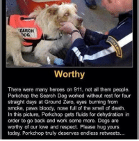 Take a second and read 👼: SEARCH  Worthy  There were many heroes on 911, not all them people.  Porkchop the Search Dog worked without rest for four  straight days at Ground Zero, eyes burning from  smoke, paws bloody, nose full of the smell of death.  In this picture, Porkchop gets fluids for dehydration in  order to go back and work some more. Dogs are  worthy of our love and respect. Please hug yours  today. Porkchop truly deserves endless retweets... Take a second and read 👼