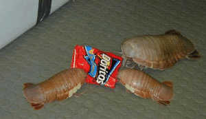 """sebuttstian:  merksmirs:  paulyoptosaurus:  accio-avengers:  wollipyos:  asexuals:  What are those?  Those are Doritos.  seriously though, what the fuck are those?!  doritos. its an old bag design i know.  seriOUSLY GUYS THOUGH WHAT THE FUCKARE THOSE THINGS THEY'RE FREAKING ME THE FUCK OUT PLEASETELL ME THEYRE NOT ACTUALLY REAL  """"nacho cheese"""" flavoured doritos brand corn chips              :  sebuttstian:  merksmirs:  paulyoptosaurus:  accio-avengers:  wollipyos:  asexuals:  What are those?  Those are Doritos.  seriously though, what the fuck are those?!  doritos. its an old bag design i know.  seriOUSLY GUYS THOUGH WHAT THE FUCKARE THOSE THINGS THEY'RE FREAKING ME THE FUCK OUT PLEASETELL ME THEYRE NOT ACTUALLY REAL  """"nacho cheese"""" flavoured doritos brand corn chips"""