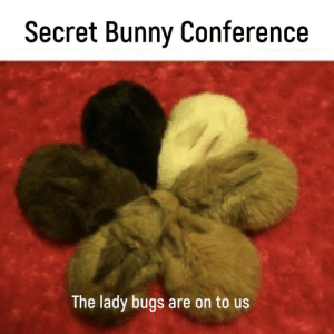 Memes, Mole, and Secret: Secret Bunny Conference  The lady bugs are on to us Must be a mole in the group via /r/memes https://ift.tt/2qUioOK