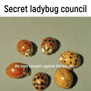 Bunnies, Memes, and Secret: Secret ladybug council  We must conspire against the bunnies They must be stopped via /r/memes https://ift.tt/2FwGE3x