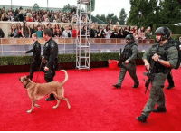 Security at the #Oscars for anti gun celebs.  Hmmm: Security at the #Oscars for anti gun celebs.  Hmmm
