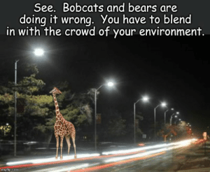 Reddit, Bears, and Cold: See. Bobcats and bears are  doing it wrong. You have to blend  in with the crowd of your environment.  imgflip.com It's cold out here.