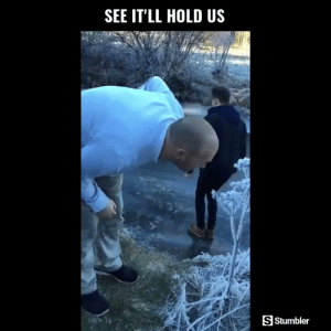 Funny, Memes, and Videos: SEE IT'LL HOLD US  S Stumbler RT @StumblerFunny: For more funny videos follow @StumblerFunny or visit https://t.co/wXxwph26cH https://t.co/YnFFjaPX2y
