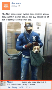 Dank, 🤖, and Pit Bull: See more  SEE  20 hrs.  MORE  The New York subway system bans canines unless  they can fit in a small bag, so this guy trained his pit-  bull to calmly sit in his small bag.  Do not ondoor  Albert  guess you could say its a fit-  bull, hahahahah.. okay, ill leave  Like Reply 891  20 hrs Albert won the internet, for today.