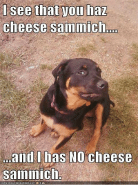Memes, 🤖, and Cheese: see that you haz  cheese sammich  and I has NO cheese  sainimich  NHRSCHEE BURGER