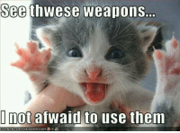 Memes, 🤖, and Weapons: See  weapons.  not afWaid to use them
