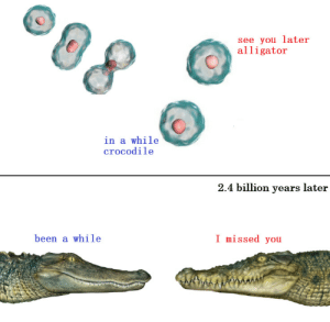 Alligator - Crocodile: see you later  alligator  in a while  crocodile  2.4 billion years later  I missed you  been a while Alligator - Crocodile