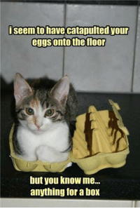 Catapult: seem to have catapulted our  eggs onto the floor  but you know me...  anything for aboX