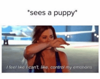 Funny, Control, and Puppy: *sees a puppy  I feel like I can't, like, control my emotions. 😳😱