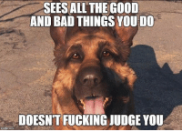 Memes, 🤖, and  Judging You: SEES ALL THE GOOD  AND BAD THINGS YOU DO  DOESNTFUCKING JUDGE YOU Dogmeat 🙌