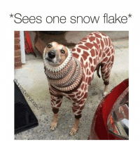Memes, Snow, and 🤖: *Sees one snow flake* same (@dogsbeingbasic)