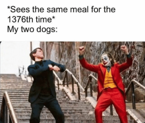 #funny #humor #lol #jokes #dank #memes #meme: *Sees the same meal for the  1376th time*  My two dogs: #funny #humor #lol #jokes #dank #memes #meme