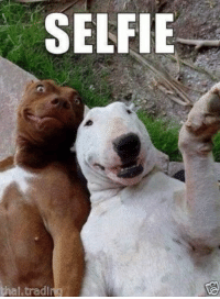 """Funny Dog Animal Picture Photo Fridge Magnet 2""""x 3"""" Collectibles #funnymemes #dogs #doglovers: SELFIE  al tradi Funny Dog Animal Picture Photo Fridge Magnet 2""""x 3"""" Collectibles #funnymemes #dogs #doglovers"""
