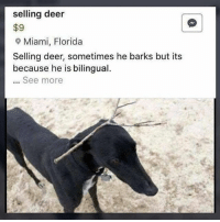 Deer, Florida, and Good: selling deer  $9  9 Miami, Florida  Selling deer, sometimes he barks but its  because he is bilingual.  See more Seems good @animalsdoingthings