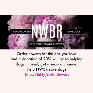 Dogs, Love, and Memes: SEND FLOWERS  SAVE DOGS  HTTP://BITLY/NWBR-FLOWERS  Order flowers for the one you love  and a donation of 20% will go to helping  dogs in need, get a second chance.  Help NWBR save dogs.  http://bit.ly/nwbr-flowers Spring is so close! Get in the springtime spirit with flowers from All Flowers. Order using the Northwest Boxer Rescue link for a 20% donation to our organization!  http://bit.ly/NWBR-FLOWERS