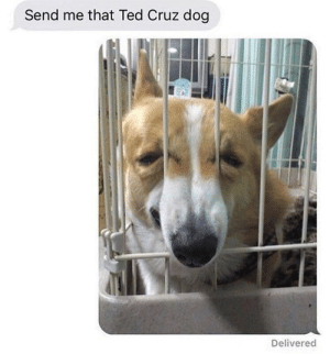Animals, Memes, and Ted: Send me that Ted Cruz dog  Delivered Dog Memes Of The Day 32 Pics – Ep51 #animalmemes #dogmemes #memes - Lovely Animals World