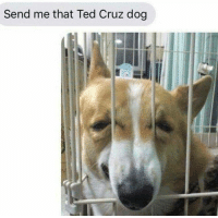 Memes, Ted, and Ted Cruz: Send me that Ted Cruz dog zodiac killer confirmed (rp @bonkers4memes 👈👈👈)