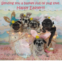 Beautiful, Easter, and Love: Sending you a basket full of pug love.  Happy Easter!  pugs and kisses We love you all !!! Thank you to our dear friend Vinney and his Mom Donna for making us all these BEAUTIFUL hats and necklaces <3 <3 <3 <3 <3 <3 xoxo ~ Theodora Grace, Oliver James, Zoe Elizabeth, Maddie Kathryn and Cedric Benjamin (I'm completely blind so I can't see my mom with the camera, but I can hear her so I can look in her direction :) and I can SMELL the treats!!!  I  love being with my brothers and sisters and being part of the gang :) )