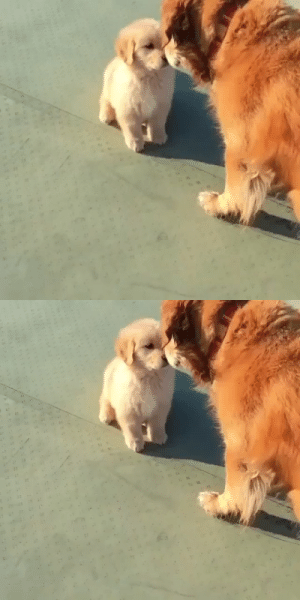 Senior dog meets a puppy and starts to feel like a puppy himself.(via): Senior dog meets a puppy and starts to feel like a puppy himself.(via)