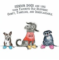 "Homeless, Memes, and Limited: SENIOR DOGS ARE LIKE  YOUR FAVORITE OLD SLIPPERS:  COMFY, FAMILIAR  AND IRR  OLDIS  GOLD  9 e Please *SHARE* & Purchase this Beautiful Limited Edition Print, created by our friend Amy at Red & Howling. Buy Yours Now: https://facebook.com/commerce/products/1272197609491826  All proceeds benefit our medical fund for the homeless senior dogs ""A Place To Bark"" rescues.   Purchase A Beautiful Print, that will remind you daily, YOu Helped Save The Life Of A Homeless Senior Dog 💕 Win/Win:)  #everylifematters #seniordogsmatter #aplacetobark"