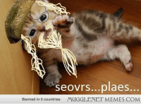 """Love, Memes, and Reddit: seovrs...plaes.  Banned in 0 countries  MUGGLENET MEMES.COM <p>The HP reference we love; the kitten Reddit demands <a href=""""http://ift.tt/1zHYLFf"""">http://ift.tt/1zHYLFf</a></p>"""