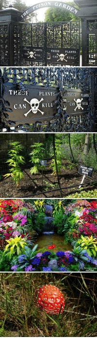 Anaconda, Target, and Tumblr: SEPLANTS  CAN  KILL  CAN  KILL   THEE PLANTSTHESE PLANTS  CAN  KILL  CAN KILL   PLEASE.KEEP  GRASS   Panorama roses spookyloop: sixpenceee:  Alnwick Poison Gardens. The gardens were established in 2005 by the Duchess of Northumberland who's affinity for the apothecary gardens inspired the collection of nearly 100 deadly and hallucinogenic plants.  I'm so looking forward to visiting this place. This year I'm gonna make it happen.
