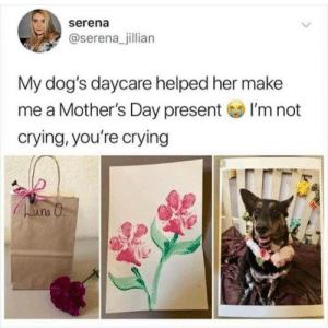 I can't right now.: serena  @serena_jillian  My dog's daycare helped her make  me a Mother's Day presentI'm not  crying, you're crying I can't right now.