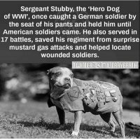 Memes, Soldiers, and American: Sergeant Stubby, the 'Hero Dog  of wwI', once caught a German soldier by  the seat of his pants and held him until  American soldiers came. He also Served in  17 battles, saved his regiment from surprise  mustard gas attacks and helped locate  wounded soldiers. If you haven't heard of Sergeant Stubby you are missing out. This terrier is the most decorated war dog of World War I. He's pretty awesome! 🇺🇸 https://t.co/y1Ji0PveVQ