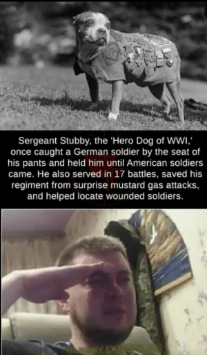 The best boi.: Sergeant Stubby, the 'Hero Dog of Wwi  once caught a German soldier by the seat of  his pants and held him until American soldiers  came. He also served in 17 battles, saved his  regiment from surprise mustard gas attacks,  and helped locate wounded soldiers. The best boi.