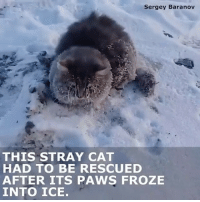 A couple in Russia saved a cat that had its paws frozen in ice! 🐱❄️🇷🇺 @BuzzFeedNews WSHH: Sergey Baranov  THIS STRAY CAT  HAD TO BE RESCUED  AFTER ITS PAWS FROZE  INTO ICE. A couple in Russia saved a cat that had its paws frozen in ice! 🐱❄️🇷🇺 @BuzzFeedNews WSHH