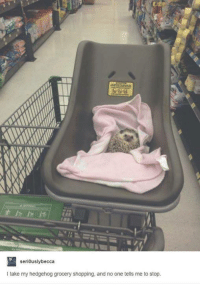 Shopping, Hedgehog, and Humans of Tumblr: seri0uslybecca  I take my hedgehog grocery shopping, and no one tells me to stop
