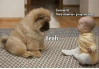 poop gif: Seriously?  They make you poop outside?  Yeah