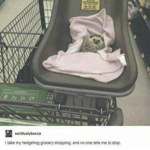 it's a just a ball of cute via /r/wholesomememes https://ift.tt/2OjETJE: seriouslybecca  Itake my hedgehog grocery shopping, and no one tells me to stop. it's a just a ball of cute via /r/wholesomememes https://ift.tt/2OjETJE