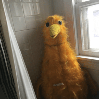 Tumblr, Blog, and Http: serpentinetigerlily: shiftythrifting: found a very large and frightening bird in a bathtub at an estate sale in grand rapids, mi F E A R