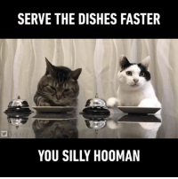 """9gag, Memes, and Twitter: SERVE THE DISHES FASTER  b ru ru  YOU SILLY HOOMAN Today on """"how to train your hooman"""" 🐱🐱 Follow @9gag App📲👉@9gagmobile 👈 - - - 📹B_ru_ru 
