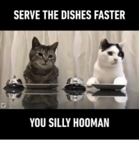 Funny, Account, and Faster: SERVE THE DISHES FASTER  YOU SILLY HOOMAN @ladbible is my favorite account right now