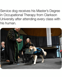 Bless Up, Girls, and Memes: Service dog receives his Master's Degree  in Occupational Therapy from Clarkson  University after attending every class with  his human.  ar  arkso  lai  0 JUST SOME GOOD BOYES AND GIRLS TO BRIGHTEN UP YA SUNDAY BLESS UP 😍